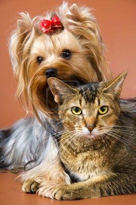 Ветеринария у кота запах из ушей